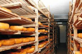 La producción de queso artesano Mahón se dispara