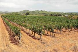 La sequía se agrava en agosto y provoca que se sequen los primeros pozos en Eivissa