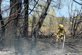 Un incendio «especialmente violento» arrasa más de 7.100 m2 de pinar en Formentera