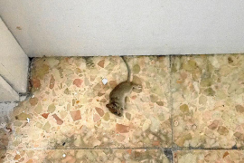March tilda de «sobreactuación» la difusión de imágenes de un roedor en Can Misses