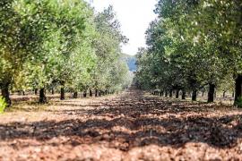 Los acuíferos de Ibiza continúan en situación de prealerta por sequía
