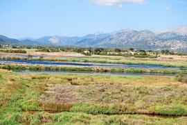 Alcúdia apuesta por el turismo ornitológico