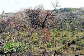 Proponen que la administración compre el islote de s'Espalmador con fondos de la ecotasa
