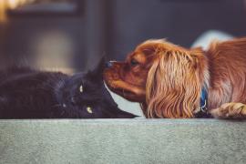 Ciudadanos pide una reforma legal para que las mascotas no sean considerados como cosas en el Código Civil