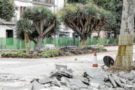 Talan 4 árboles enfermos de Vara de Rey y trasplantan otros 5 durante las obras