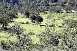 Europa elige dos proyectos rurales pitiusos como ejemplos a seguir