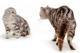 Qué hacer si mi gato se comporta de manera agresiva