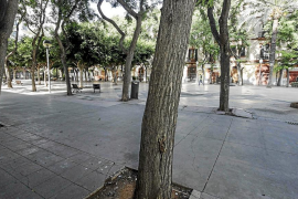 Los árboles de la plaza del Parc más próximos a las fachadas serán eliminados