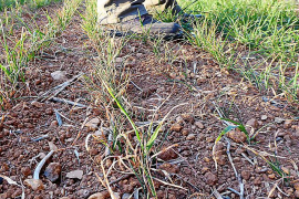 El año agrícola acaba con pérdidas de más del 50 % en los cultivos de secano
