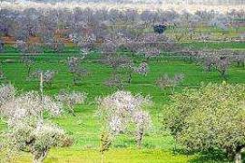 El Ayuntamiento de Sant Antoni aporta 3.000€ para mantener el Pla de Corona