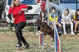 Jornada festiva de juegos para canes