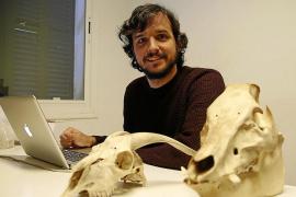 «Roma introdujo en Balears el gato, la liebre, la gallina y la rata negra»