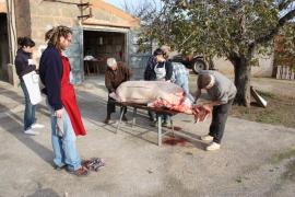 Animalistas contra las 'matances'