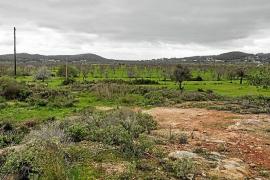 Las inundaciones en el Pla de Corona pueden salvar almendros condenados a desaparecer