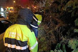 Los bomberos realizaron una treintena de servicios en 24 horas
