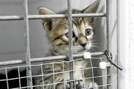 Los gatos de sa Coma tienen por primera vez calefacción en invierno