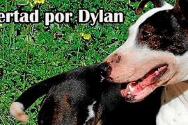 Ibiza 4 patas inicia una recogida de firmas para pedir la «libertad» del perro Dylan