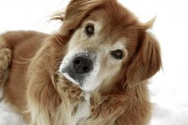 ¿Cuál es la equivalencia de la edad humana a la de los animales?