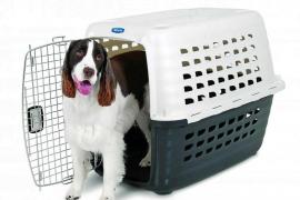 Cómo habituar al perro a ir en el transportín