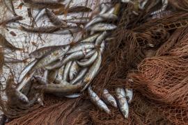 La descarga pesquera en Baleares se dispara un 257,2 % hasta noviembre
