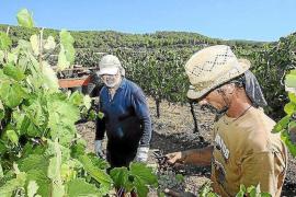 Baleares alcanza su récord en vino de calidad