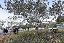 Vila estrena un nuevo parque canino de 1.400 metros cuadrados en Can Misses