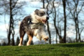 Crean el primer sello turístico para paquetes vacacionales adaptados a mascotas de España
