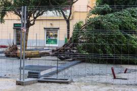 El fuerte temporal provoca la caída de árboles en la plaza del Parque de Vila
