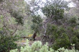 Imágenes de es Canar tras el paso del temporal