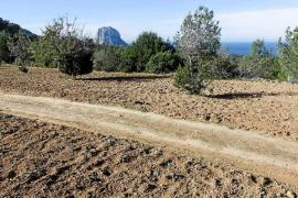 Los técnicos afirman que hay genista en Cala d'Hort, pero no donde se prevé la mansión