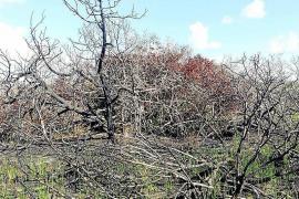El Parlament insta al Govern y a Costas a que no autorice excursiones en s'Espalmador