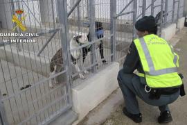 Sacrifican a los cinco perros que mataron a un hombre en Alicante