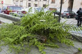 Muere una niña de 12 años tras caerle una rama al salir del colegio