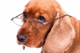 ¿Ha cambiado tu perro viejo su forma de comportarse?