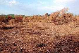 El parque fotovoltaico de Sant Joan ocupará tres hectáreas y tendrá 9.600 placas solares