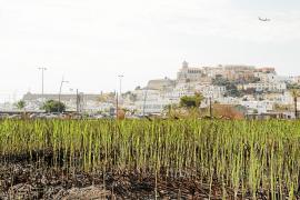 Ses Feixes recupera el verde pero mantiene el estado de abandono
