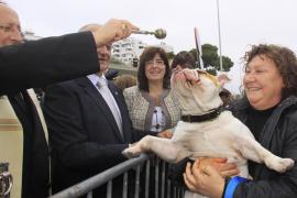 Locura animal en Sant Antoni