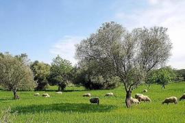 Luz verde a la declaración ambiental de la norma territorial
