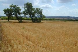 El Govern aprobará el decreto de exoneración de las instalaciones agrarias