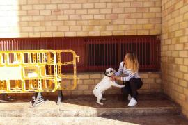 Visto para sentencia el juicio contra la pareja denunciada por desalojar a una inquilina y su perro