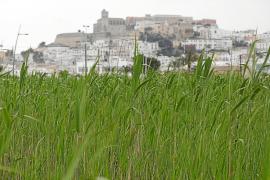 Epic denuncia la «preocupante inacción» de Vila en ses Feixes