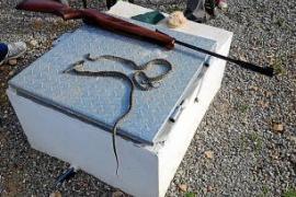 Medio Ambiente captura en un mes 144 serpientes en las Pitiusas