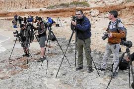 Más de 50 fotógrafos de naturaleza se dan cita en Ibiza este fin de semana