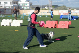 Jornada de adiestramiento canino en Sant Antoni