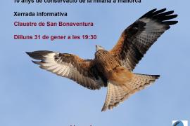 El milano, un ave en peligro de extinción