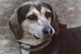 Detenido por maltratar a su perra desnutrida y causarle la pérdida de un ojo