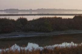 Formentera inicia el control de mosquitos en el Parque Natural
