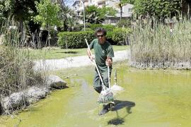 Comienza la limpieza del lago del Parc de la Pau
