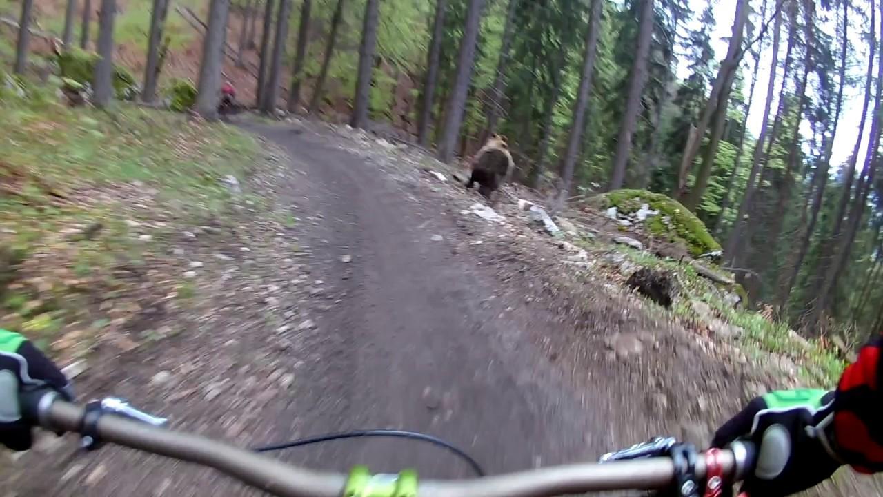 Un oso irrumpe en el camino de unos ciclistas en Eslovaquia