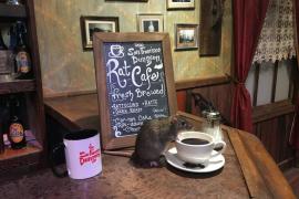 ¿Se tomaría un café acompañado de una rata?